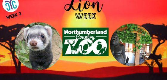 Northumberland Zoo Family Day